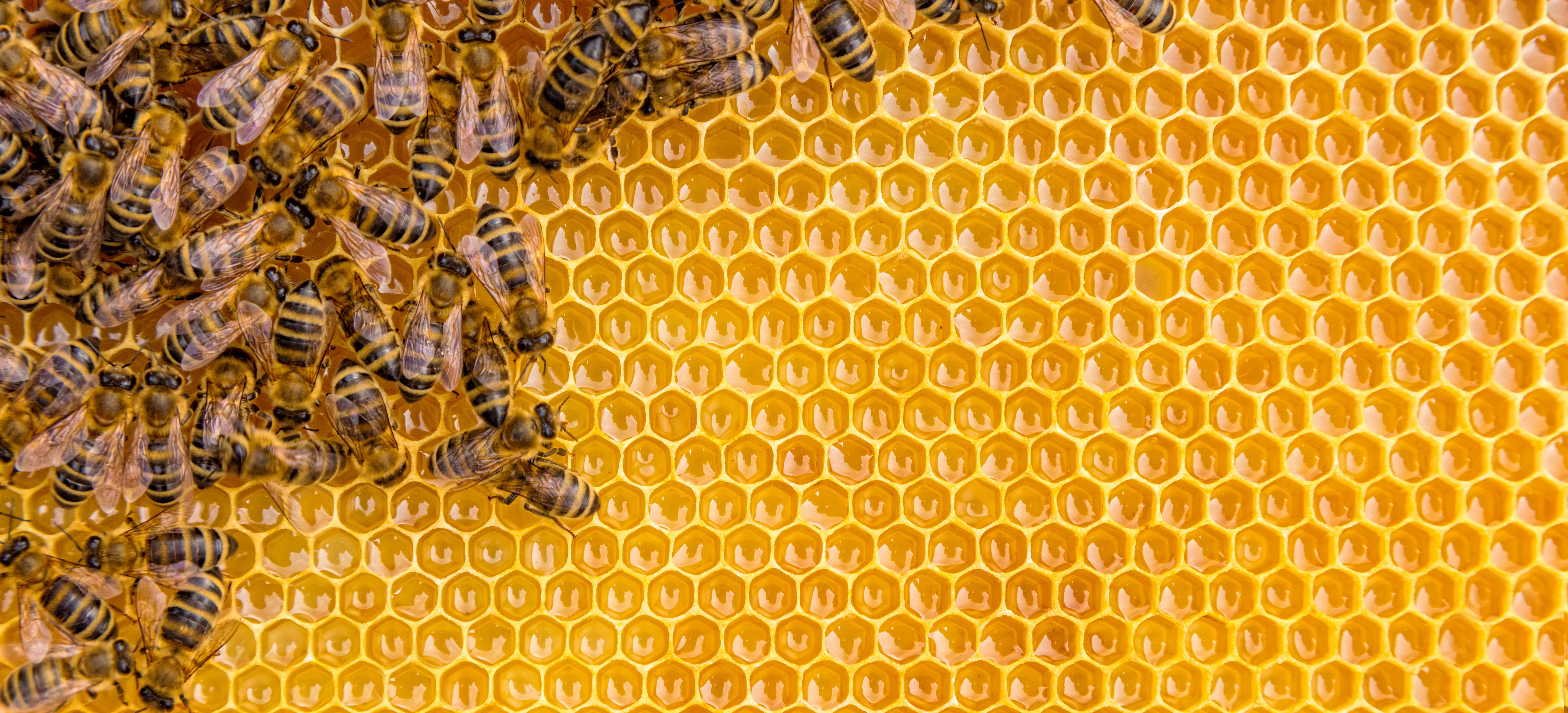 Bienen-werte