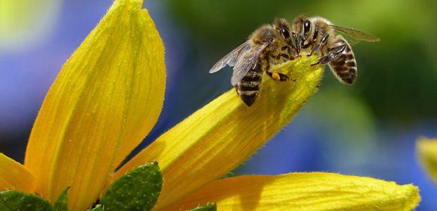 Wo befindet sich das Didaktische Zentrum für Bienen-Werte