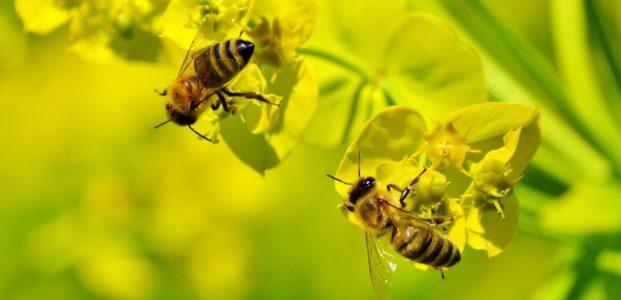 Bienenwaagen